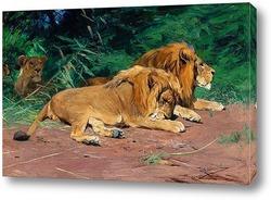 Картина Львы на отдыхе