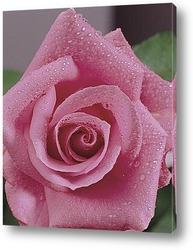 Розы для интерьера