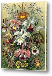 Картина Красота форм в природе. Орхидеи