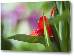 Постер бутон тюльпана