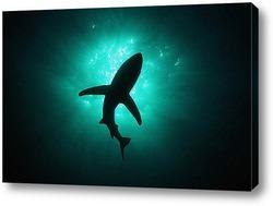 Картина Shark059