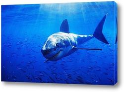 Постер Shark021