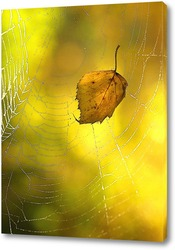 кленовый лист в паутине