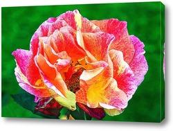 Постер Пламенная роза