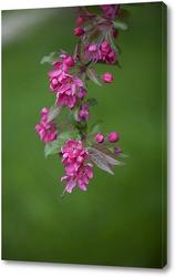 Постер цветущий боярышник