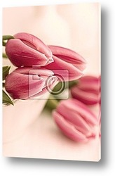 tulip in flower field