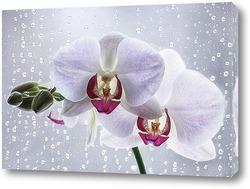Постер Орхидея на плачущем окне