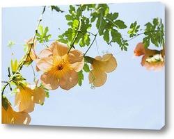 Flower425
