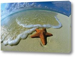 Постер Starfish020