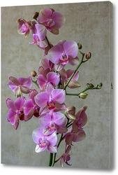 Ветка орхидеи на черном фоне