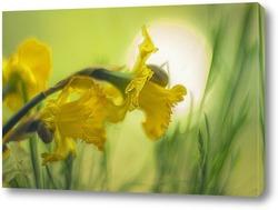 Постер Нарциссы.