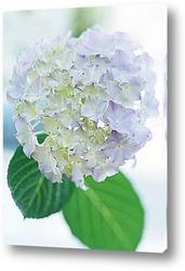 Flower649