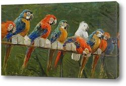 Постер Попугаи