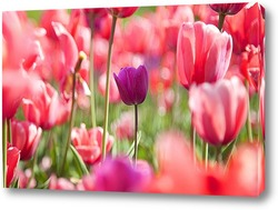 Rosa Tulpen Collage - FrГјhlingsblumen