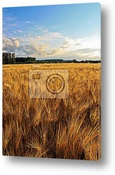 Golden Fields - Champs de blГ©