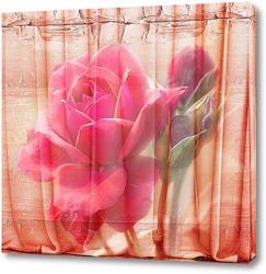 Постер Розы и шторы