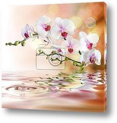 Орхидея над дрожащей водой