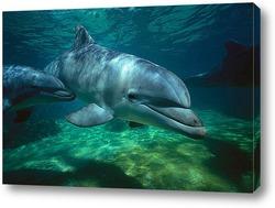 dolphin122