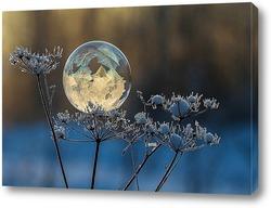 Замёрзший мыльный пузырь на веточке сухого растения