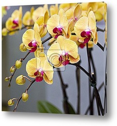 Isolated orchid flowers on white