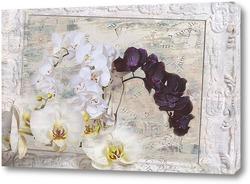Постер Белые и черные орхидеи