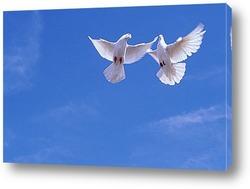 Постер Голубки под небесами