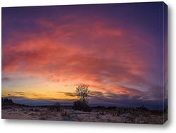 Постер Одинокое дерево на закате солнца