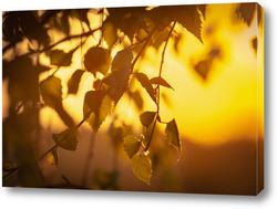 """Картина """"Лучи закатного солнца купаются в листьях березы""""."""
