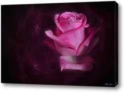Постер Волшебная роза