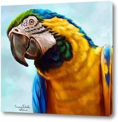 Постер Попугай ара