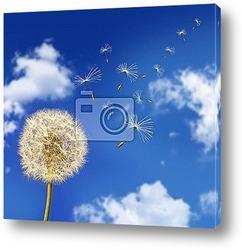 Постер Dandelion seeds blowing in the wind against blue sky