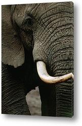 elephant010