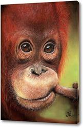 Постер Орангутанг