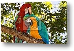 Постер Macaw parrots