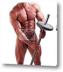 Постер Bodybuilder