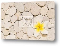 Постер Frangipani and white pebbles