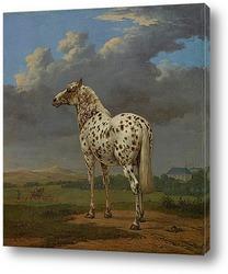 Постер Пегая Лошадь