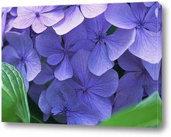 Flower669