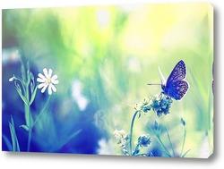 нежная голубая бабочка сидит на летнем лугу
