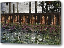 Постер Лотосы - цветы Будды. Цейлон.
