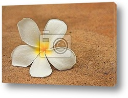 Frangipani and white pebbles