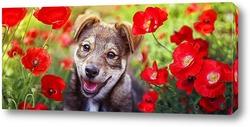 Картина щенок в маках