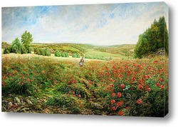 Край поля в цвету