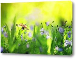 Постер майский жук летит над лугом