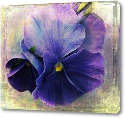 Постер Фиолетовая фиалка