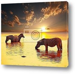 Постер Zebra