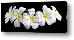 great image of some white silk daisy flowers