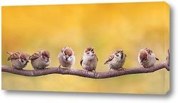 Постер птенчики