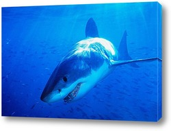 shark021