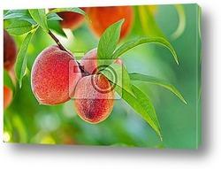 Красивый букет цветов и свежие яблоки на деревянном столе